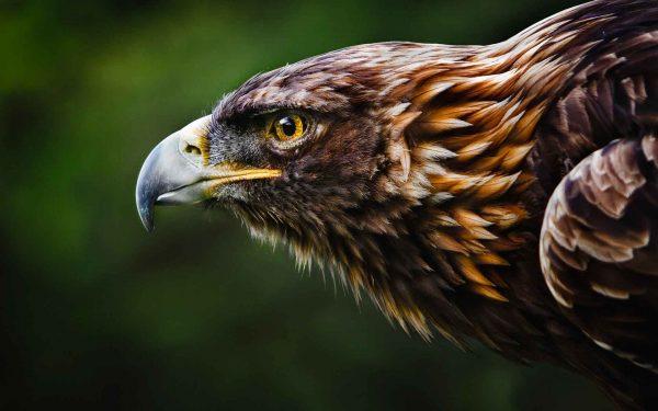 Indicatore di trading the Eagle